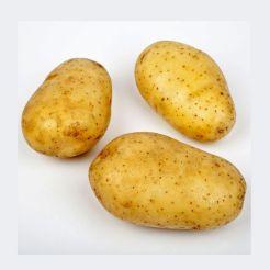 plants-de-pomme-de-terre-bio-bintje-3-kg